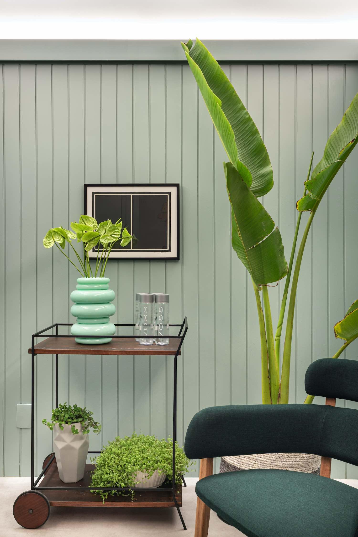 banana plant inside the room