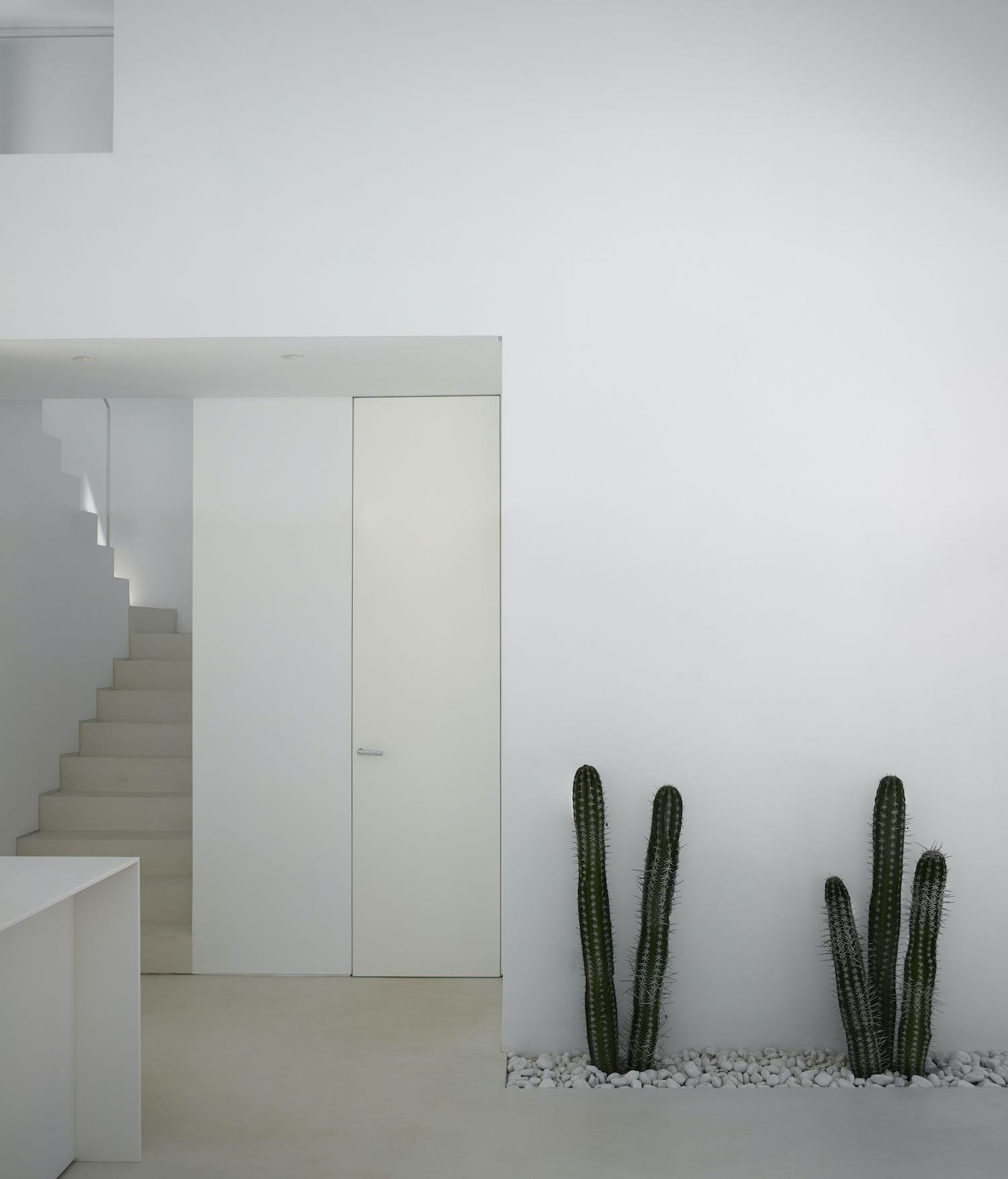 cactus inside the room