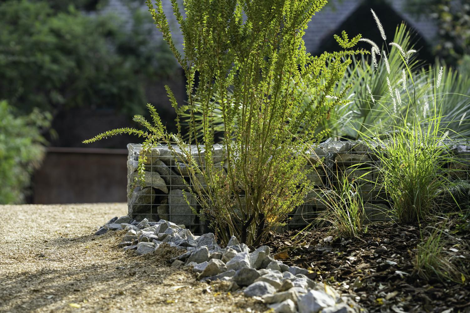 garden with plants, sand and gravel