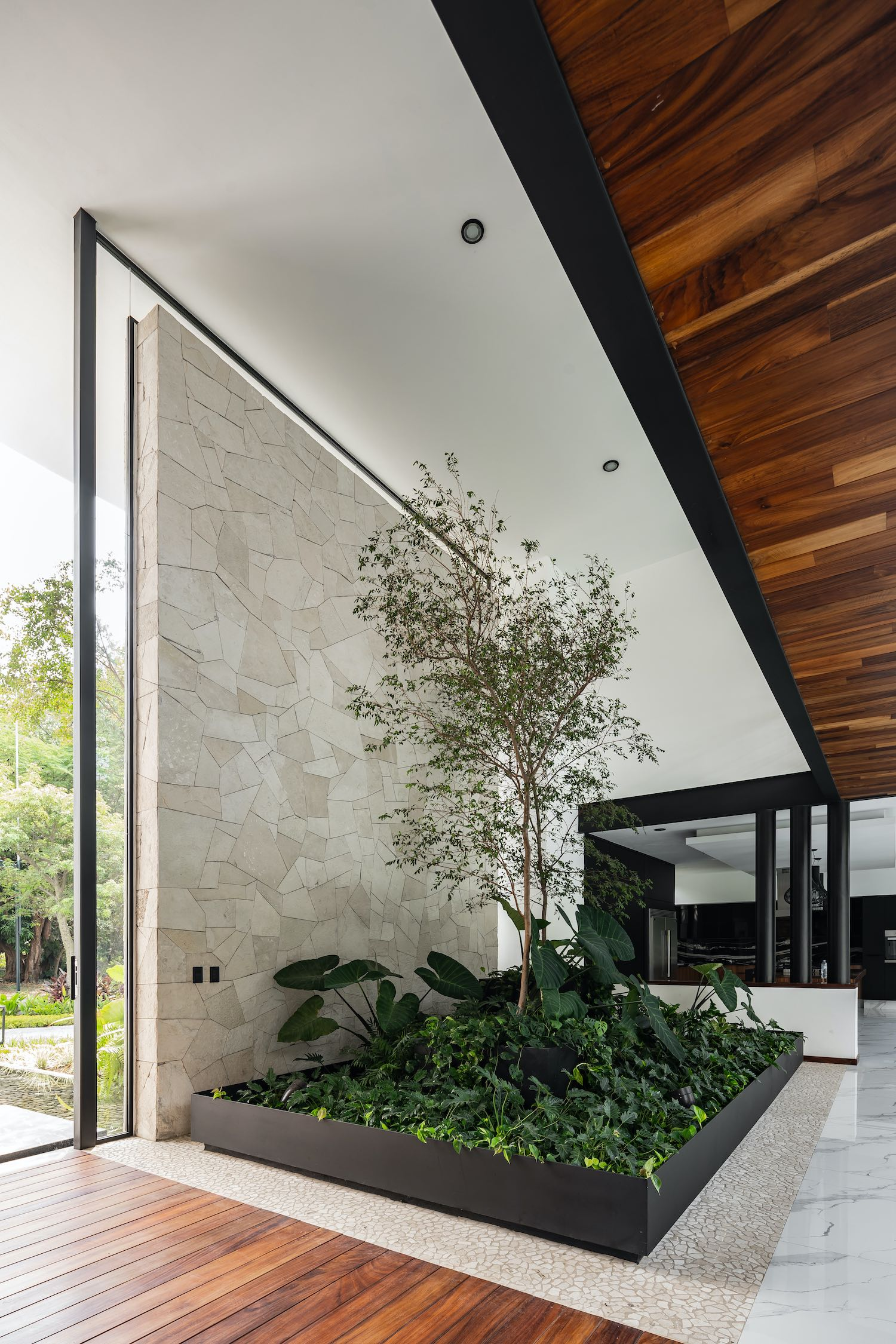 green plants and tree growing inside the house