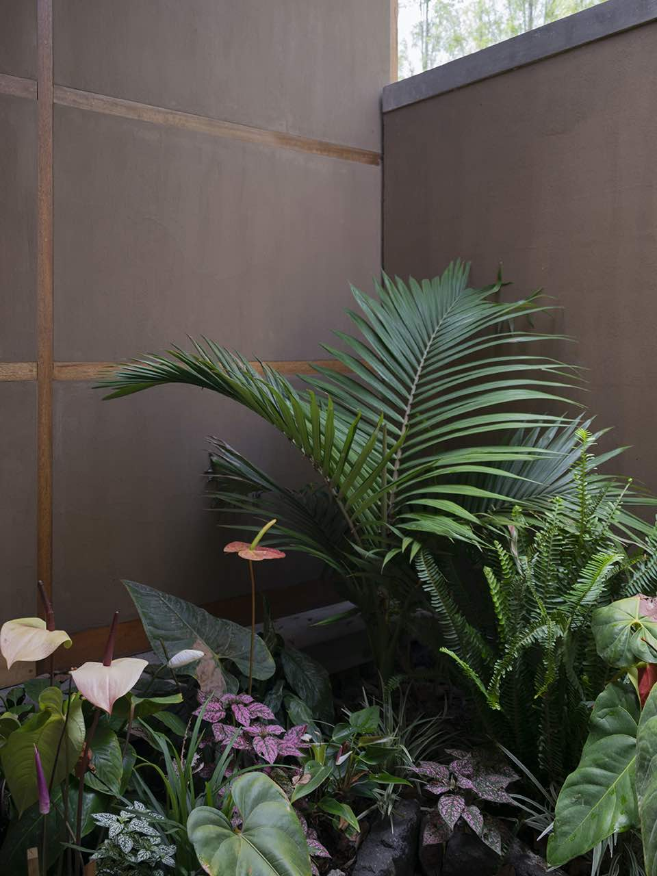 indoor garden with plants with big leaves