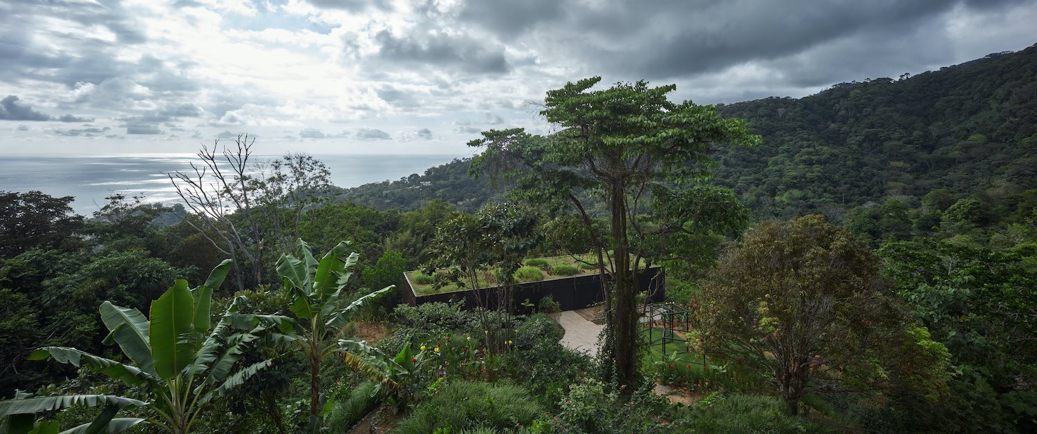 jungle with trees and sea view