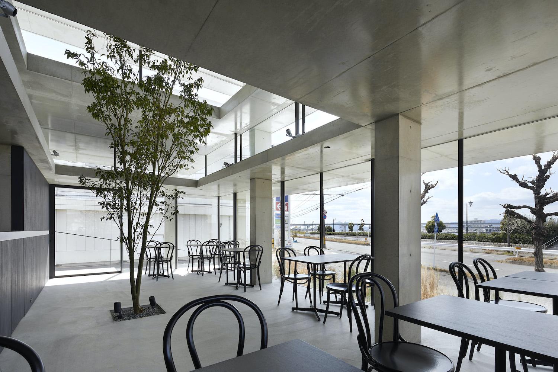 a small tree inside coffeeshop