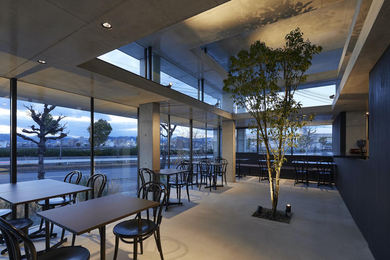 tree with illumination inside cafe