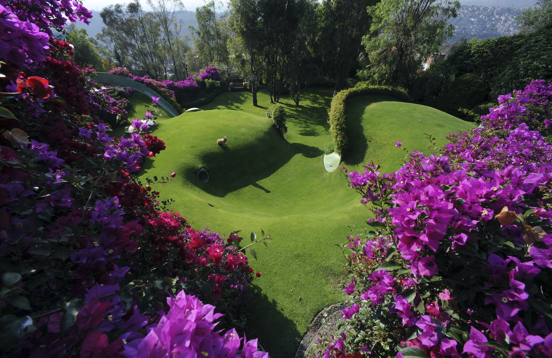 green landscape with Bougainvillea flowers