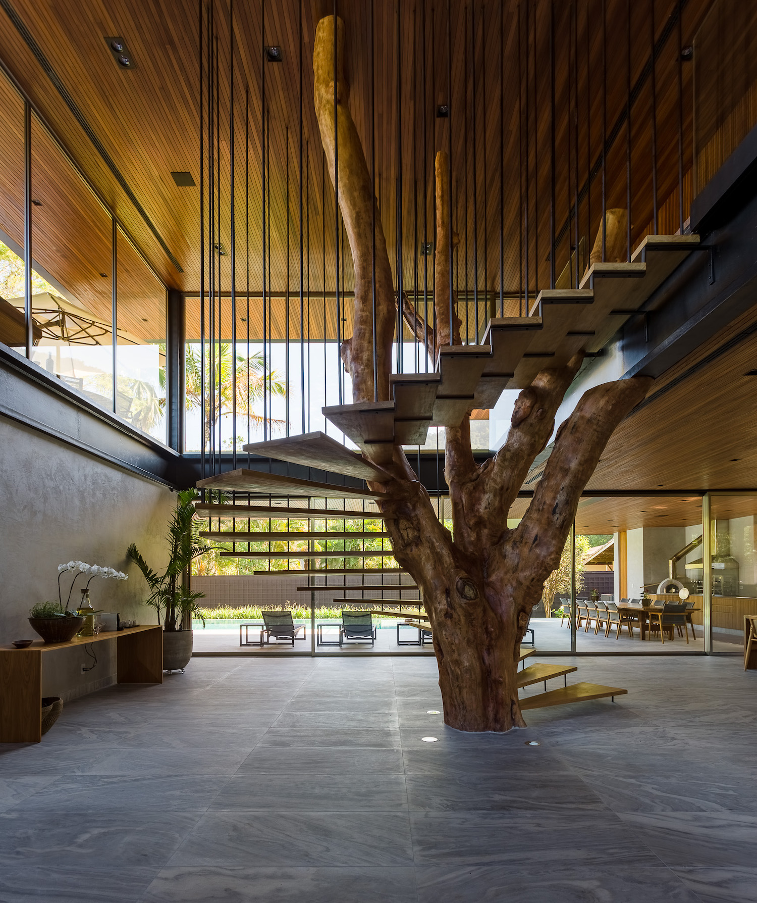 natural tree grown inside home