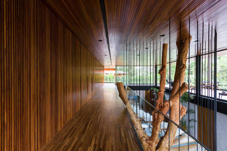 tree grown inside a wooden house