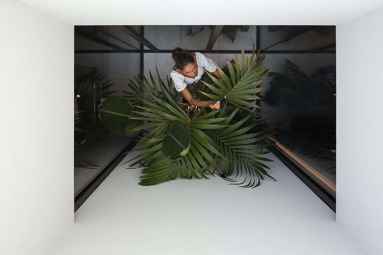 indoor garden plant in the patio