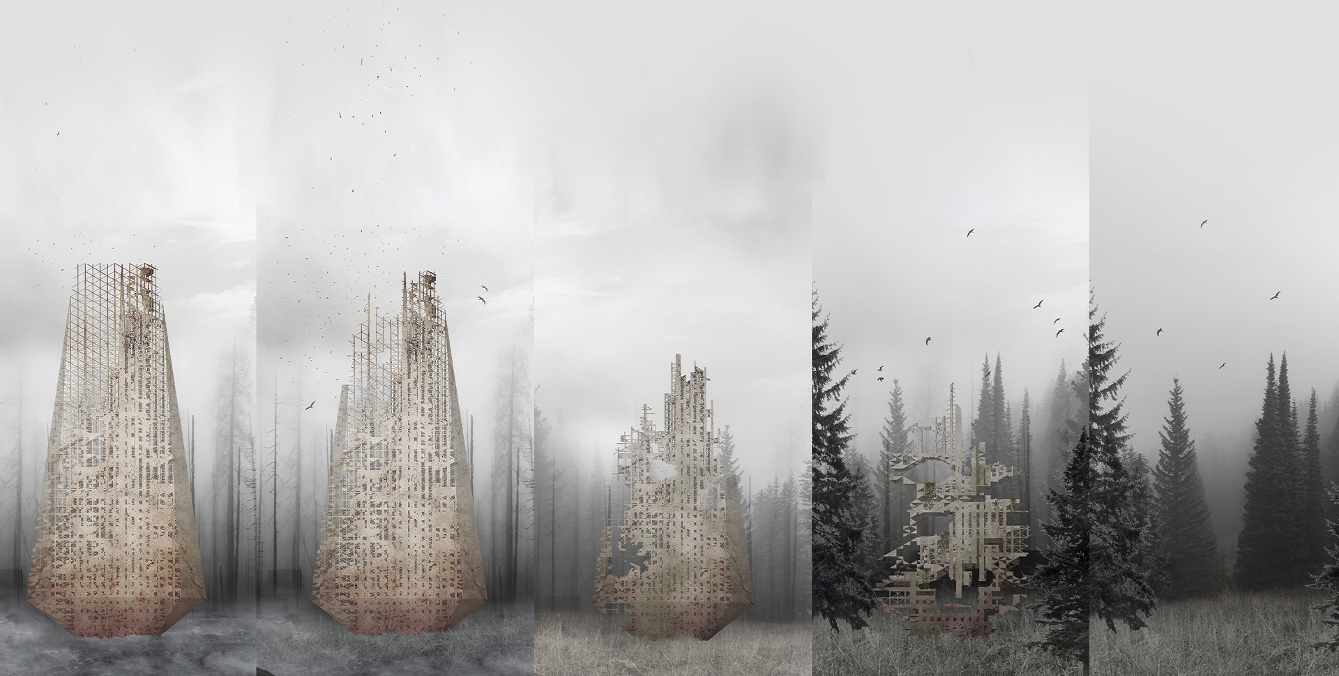 lifecycle of the forest skyscraper