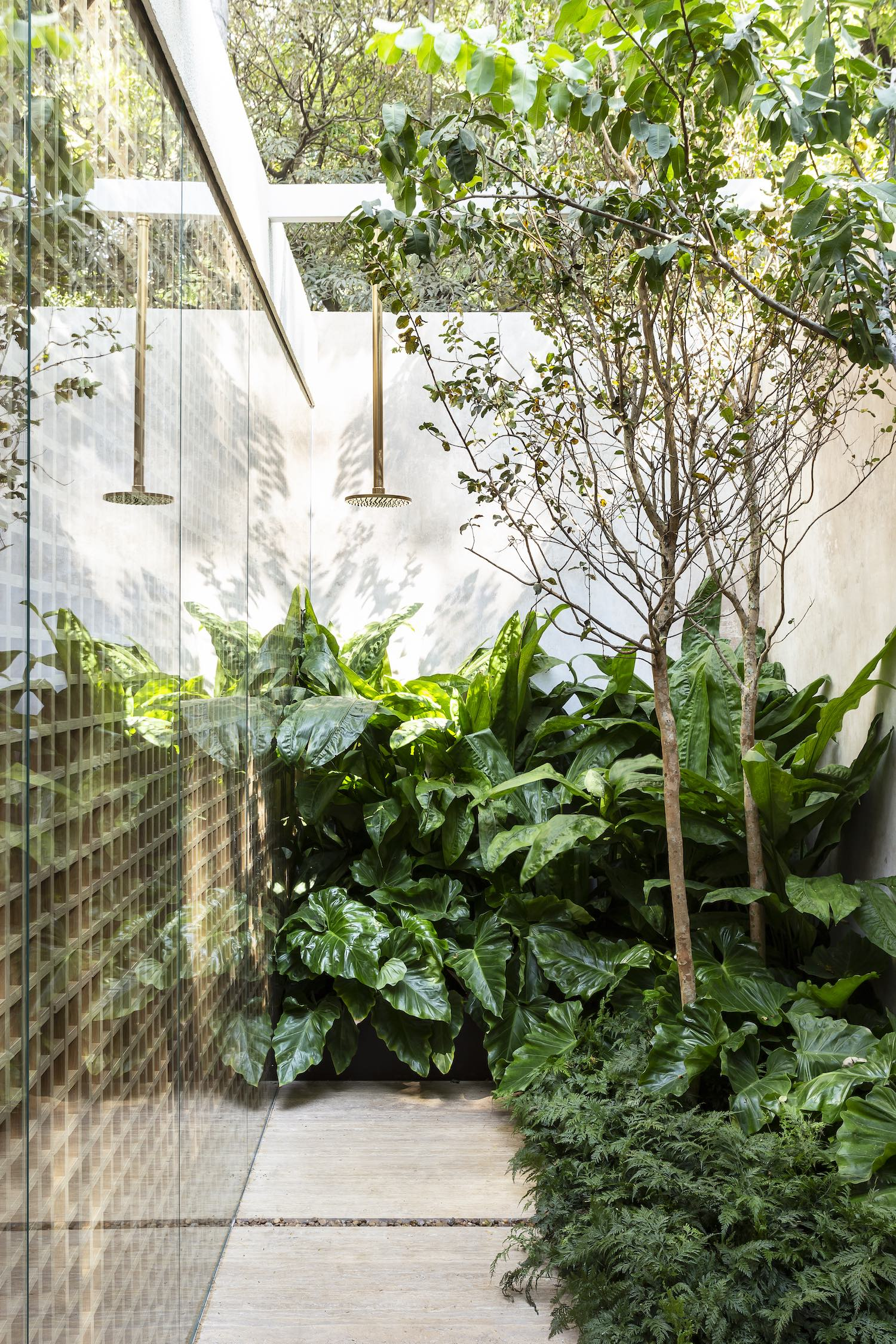 patio with tropical green plants